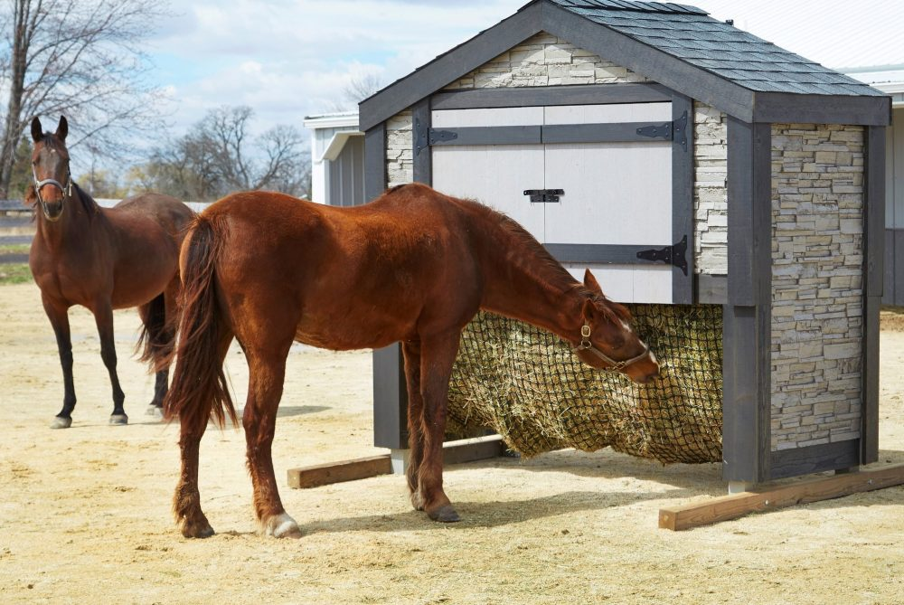 Slow Feeders for Horses